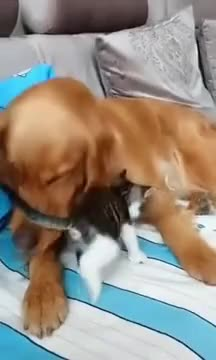 Kitten: ⁣⁣Play With Me! ⁣Dog : I'm too old for this shit.