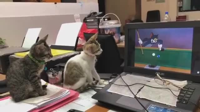 ⁣Kittens watching Tom and Jerry