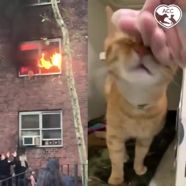 ⁣Kitty saves himself!