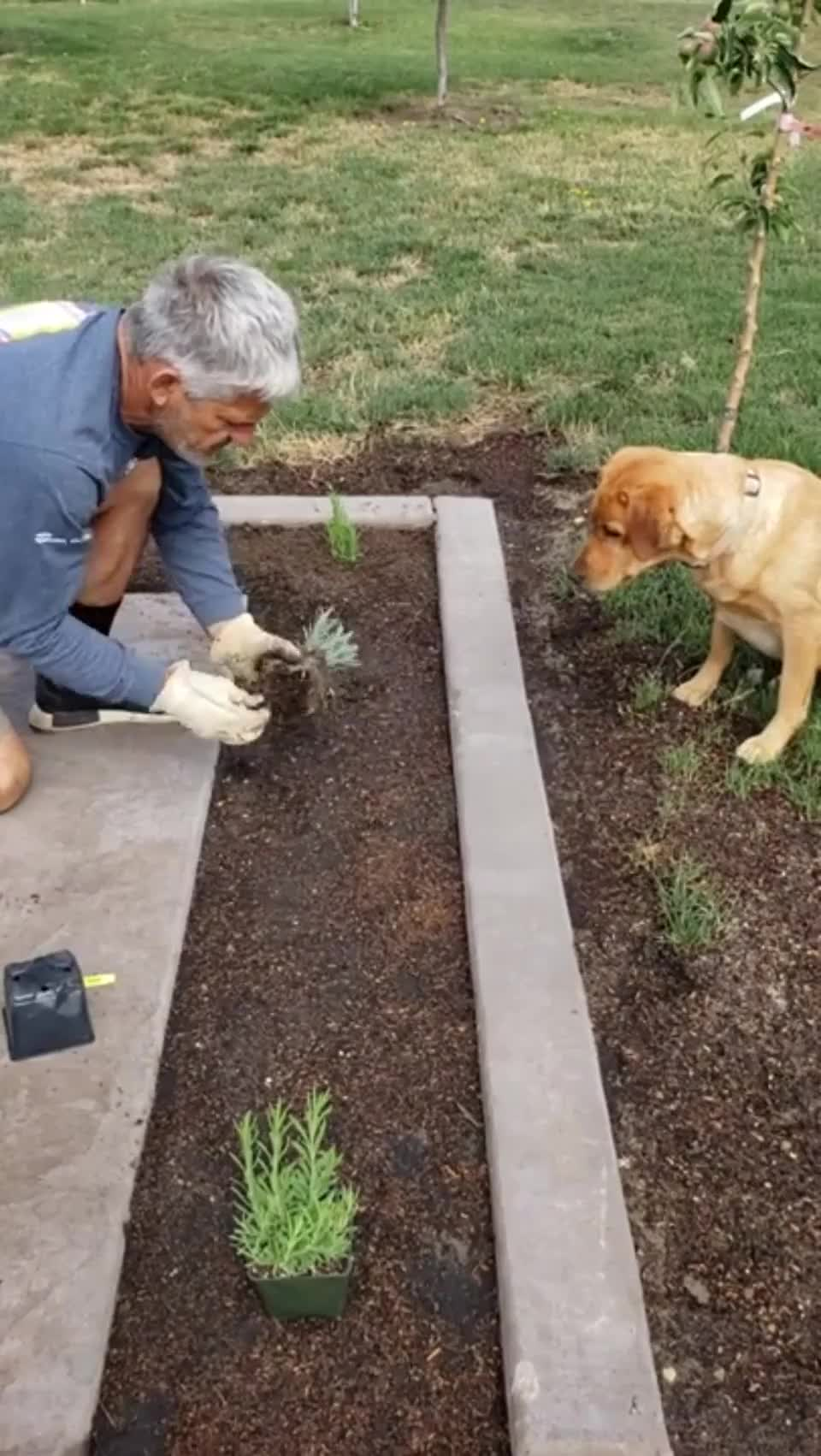 ⁣Minutes later the dog has dug up all those plants, lol