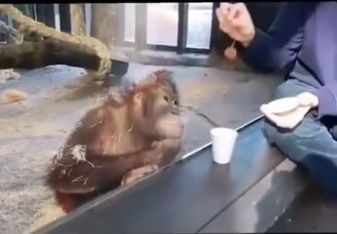 ⁣Monkey reacts to magic 😄