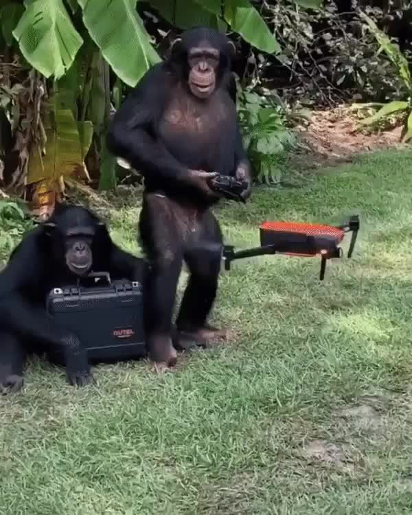 ⁣monky drone