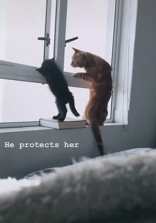 ⁣No! Dad Cat
