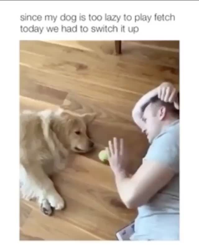 Play fetch with lazy dog