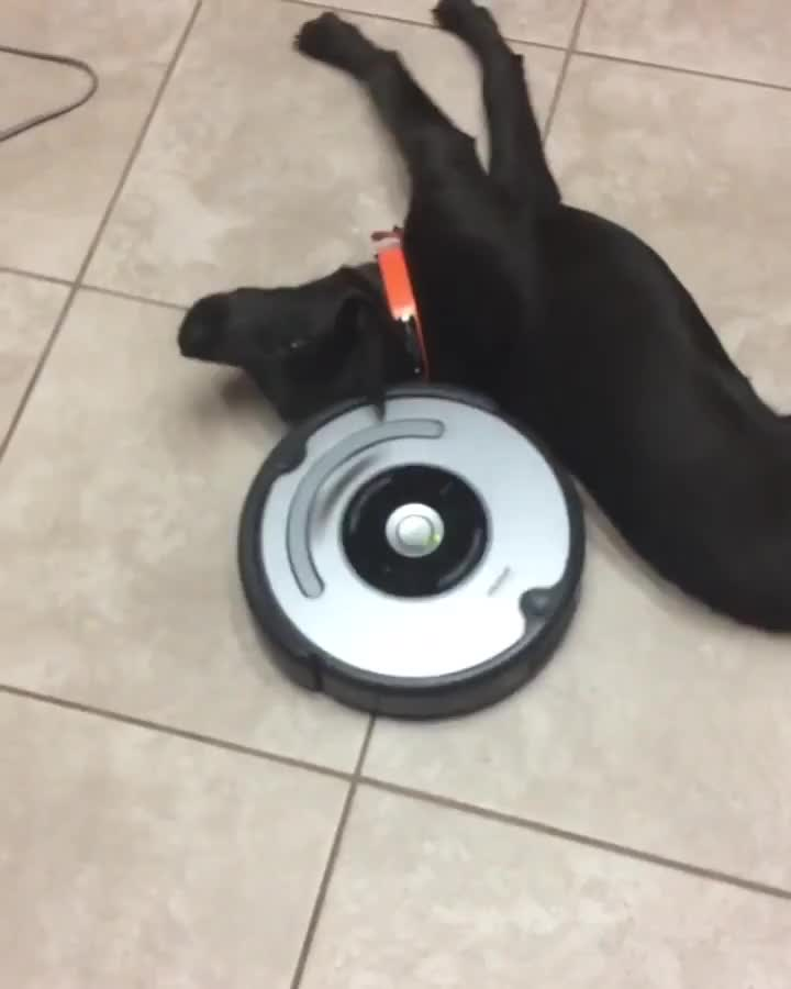 Pup is just getting a full body massage thanks to Roomba