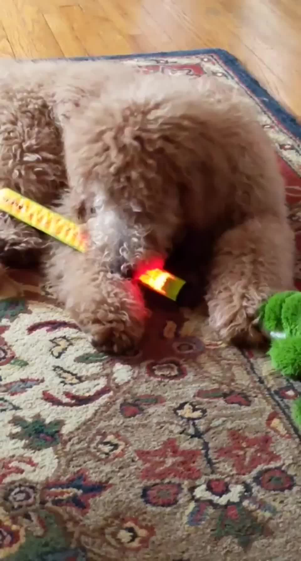 Pup vs. ⁣snap bracelets