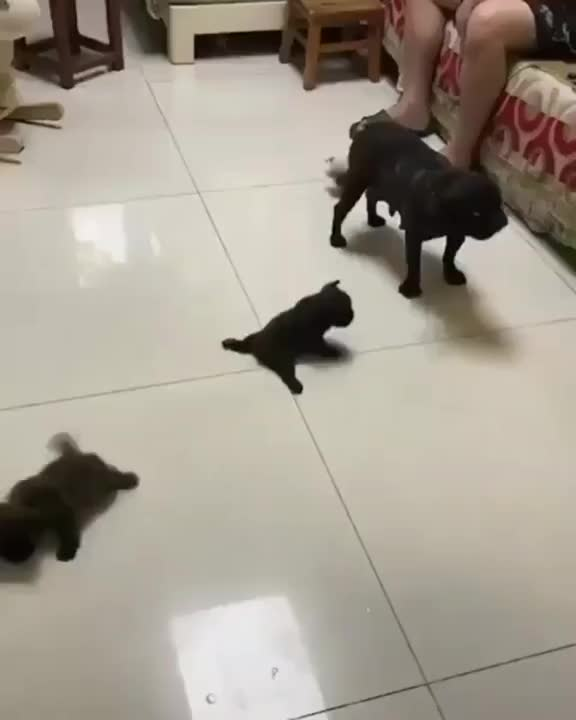 Puppies vs ⁣⁣floor race