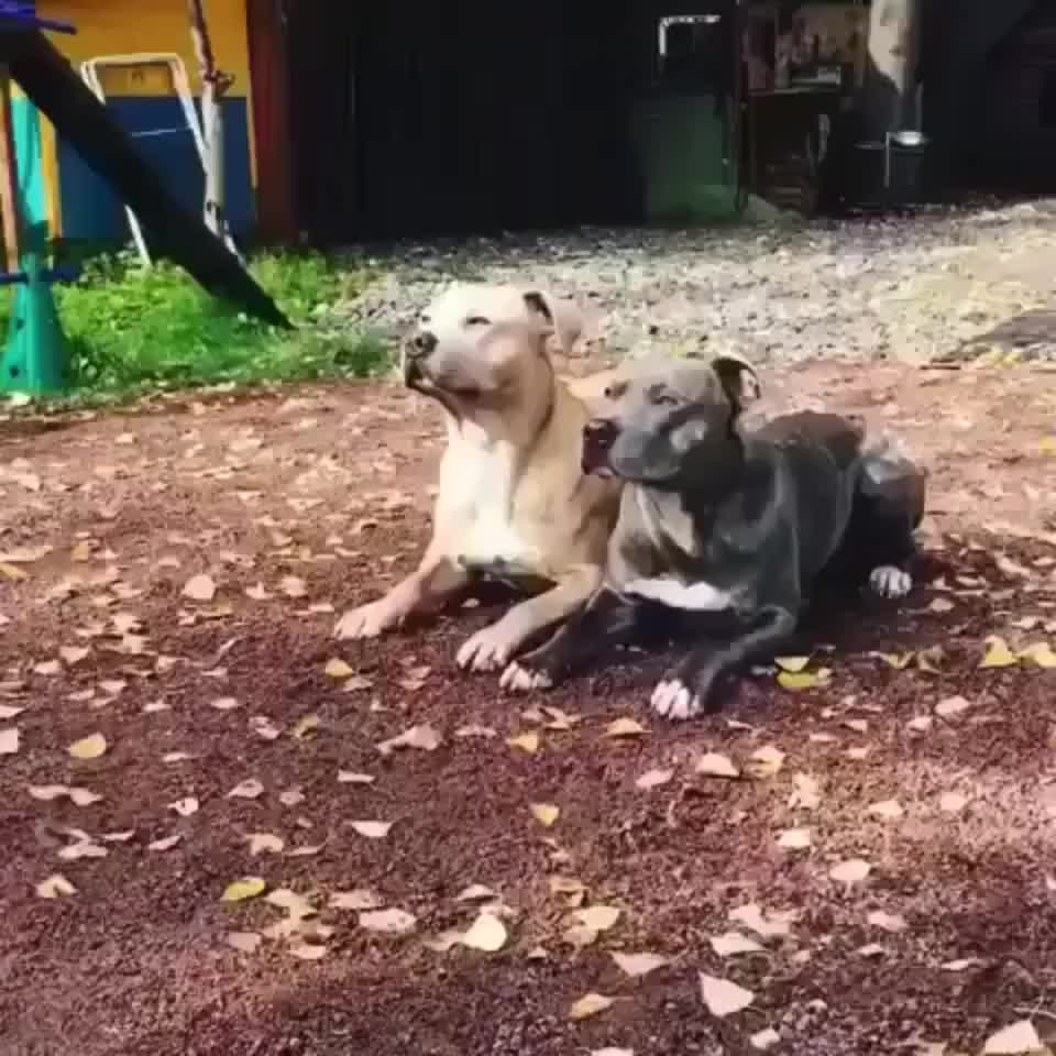 ⁣synchronized dogs