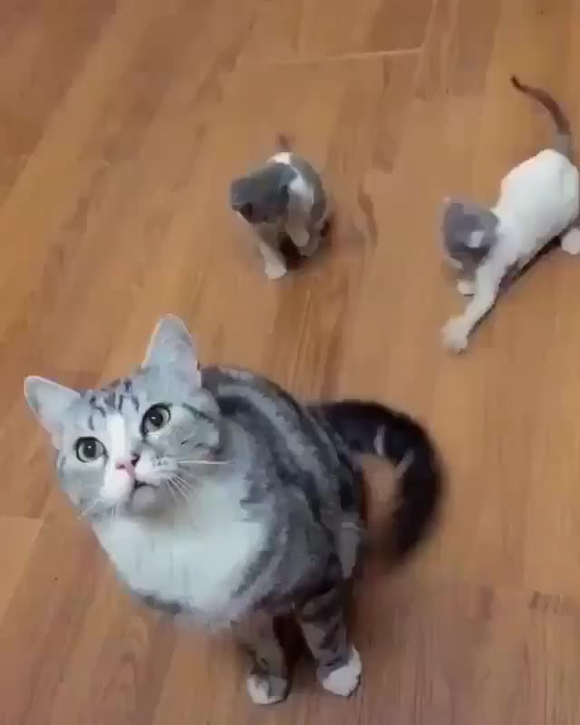 ⁣The best way to entertain kittens