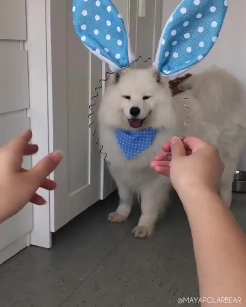 The goodest Easter bunny