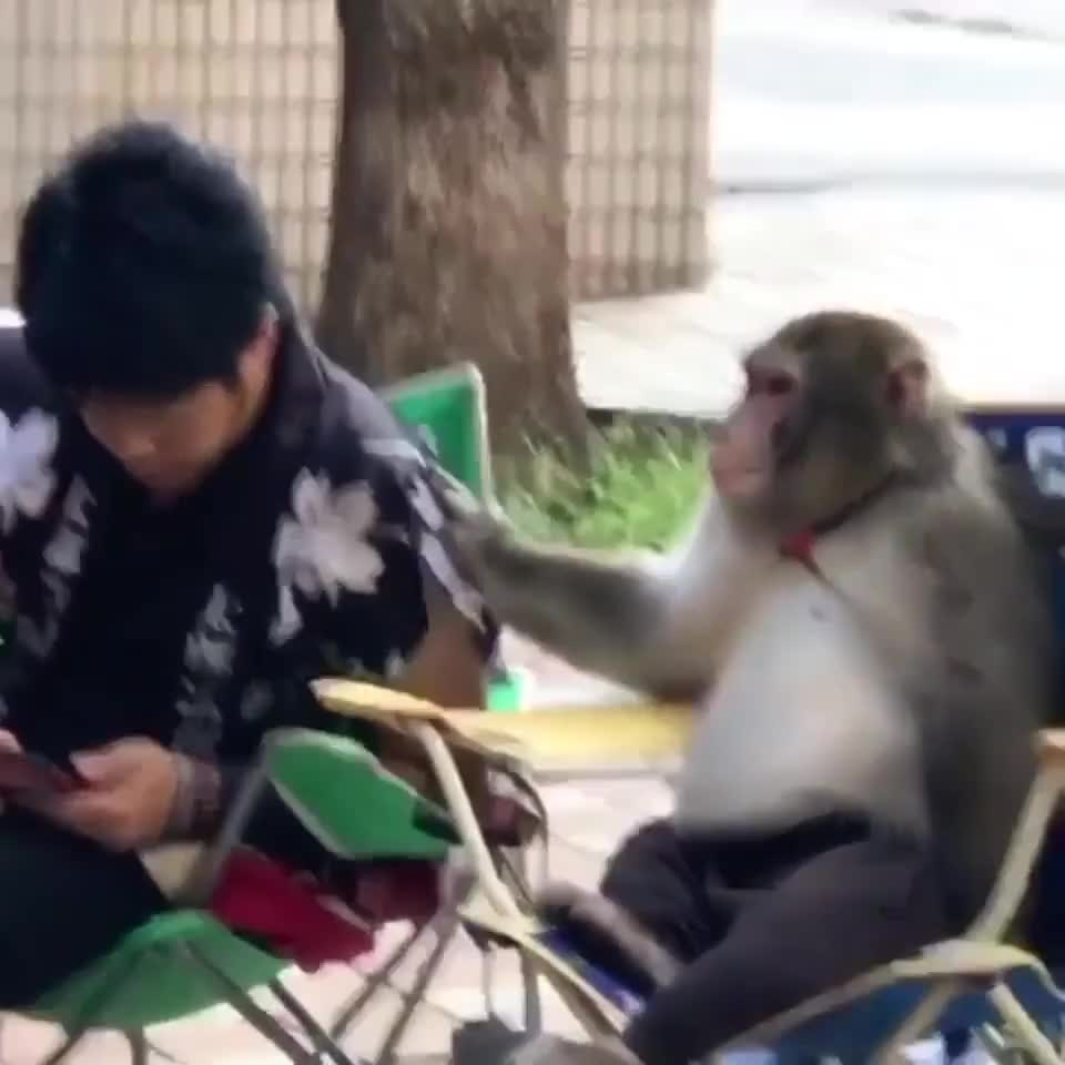 ⁣The monkey really pondered on what he was told there for a second.