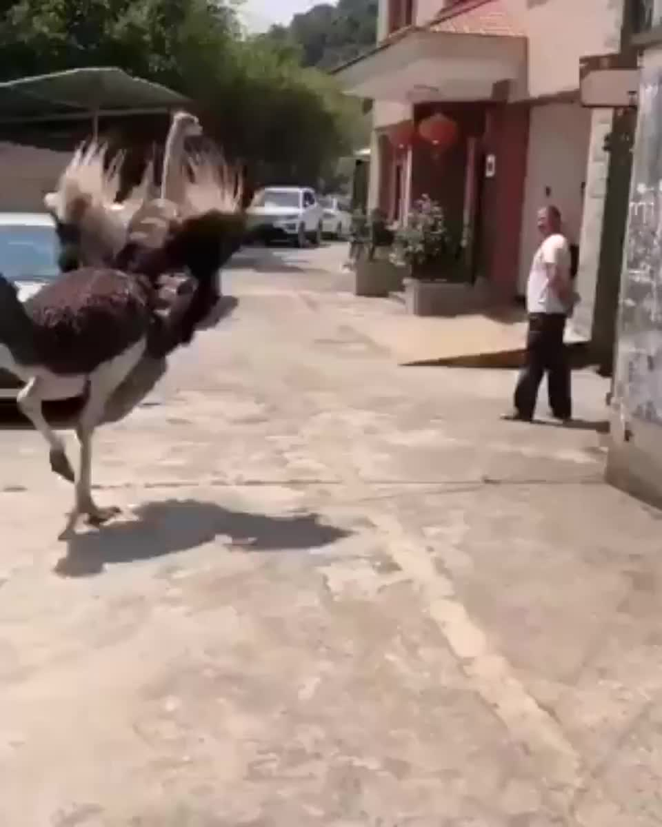 ⁣the way the ostrich ran away after attacking him liked it was the victim and not the other way around