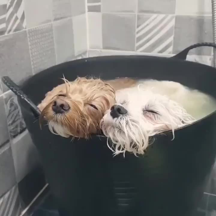 These dogs have actually melted in their relaxation.