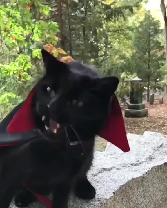⁣This cat is ready for Halloween 👻