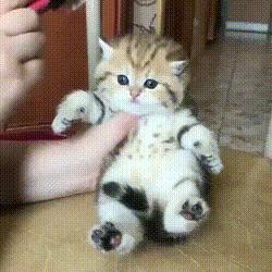 Kitty gets a nice brushing 😊 😍