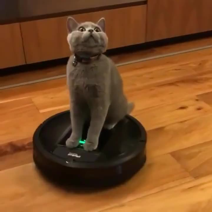 """My owner keeps putting me on this damn thing!"""
