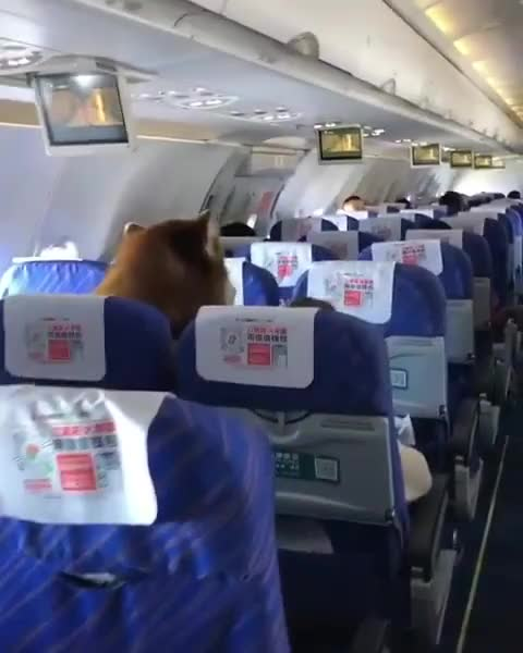 ⁣Was wondering how the hell they let a bear on a flight at the start of the gif.