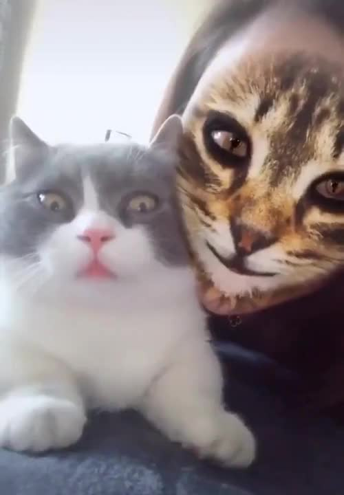 ⁣When cat meet cat filters