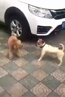 ⁣When the dog fight turns into a dance